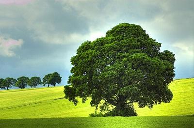 04-15-Green Tree