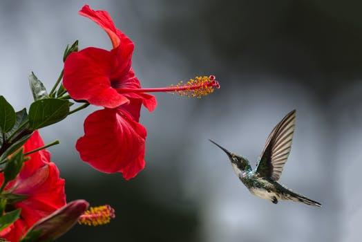 08-22-humming bird
