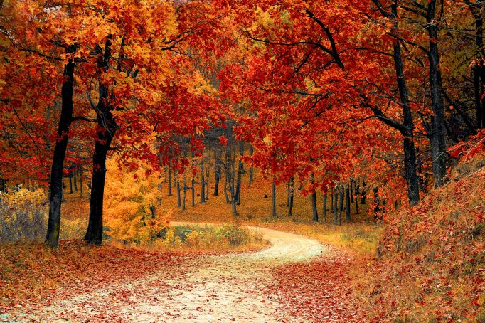10-14-18-road-nature