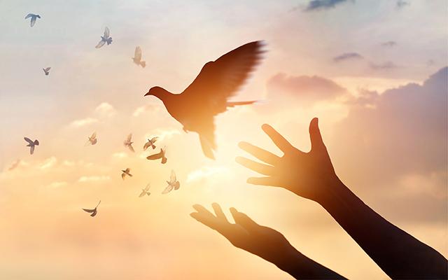 11-14-18-forgiveness